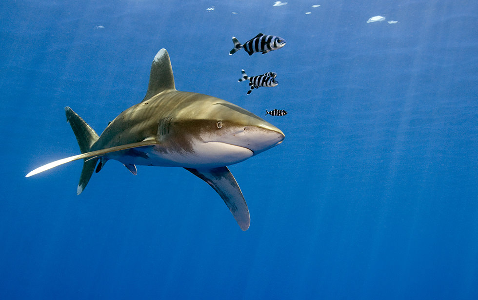 Top 15 Best Places To Scuba Dive With Sharks Diviac Magazine