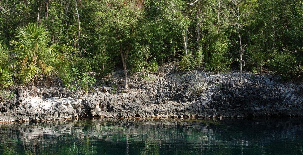 El Cenote / Cueva de los Peces