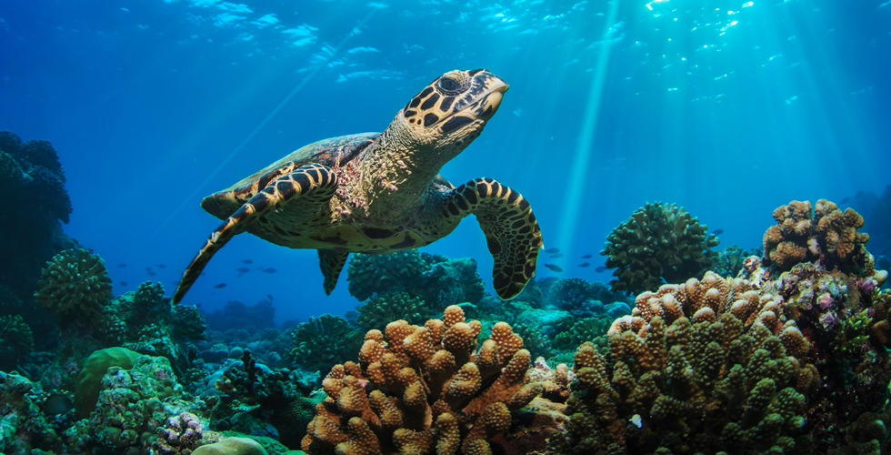 Dive with sea turtles