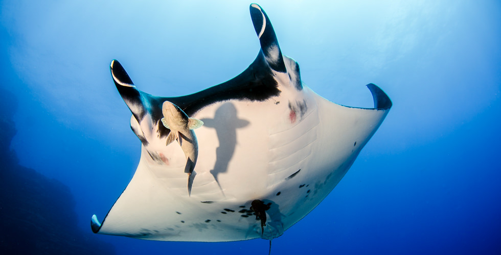 Diving with Manta Rays in Socorro, Mexico | Diviac Magazine
