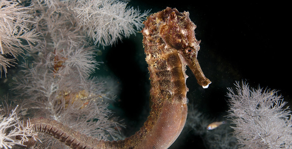 muck macro diving the 10 best dive sites in the world diviac