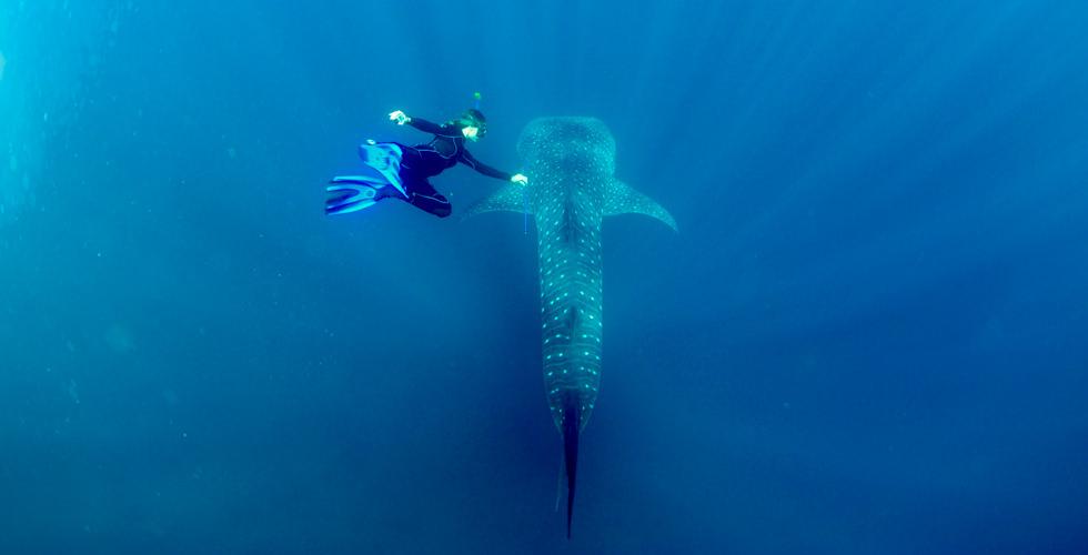 Ginevra with a whale shark