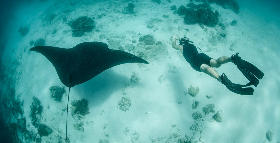 swimming with manta ray