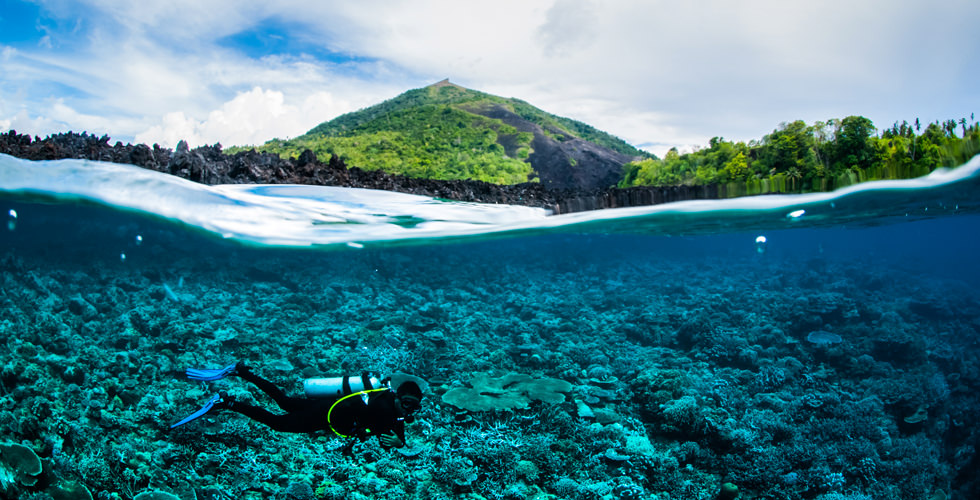 Dive among coral reefs