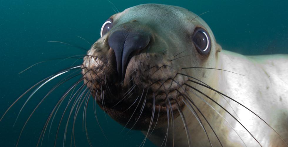 a-friendly-sea-lion