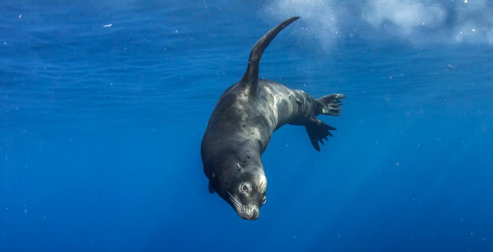 seal-isla-espiritu