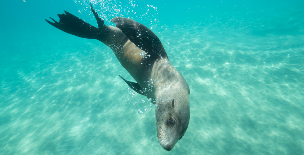 Playing with sea lion