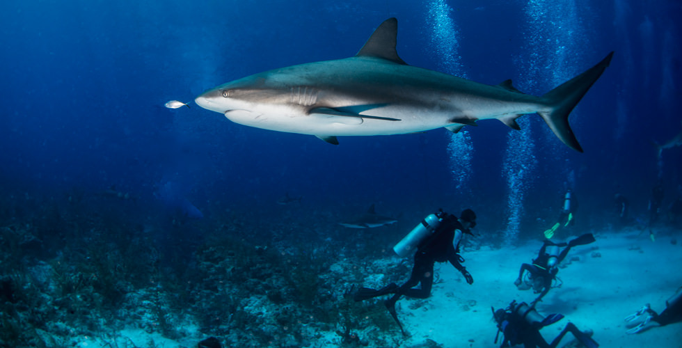 shark-reef-elke