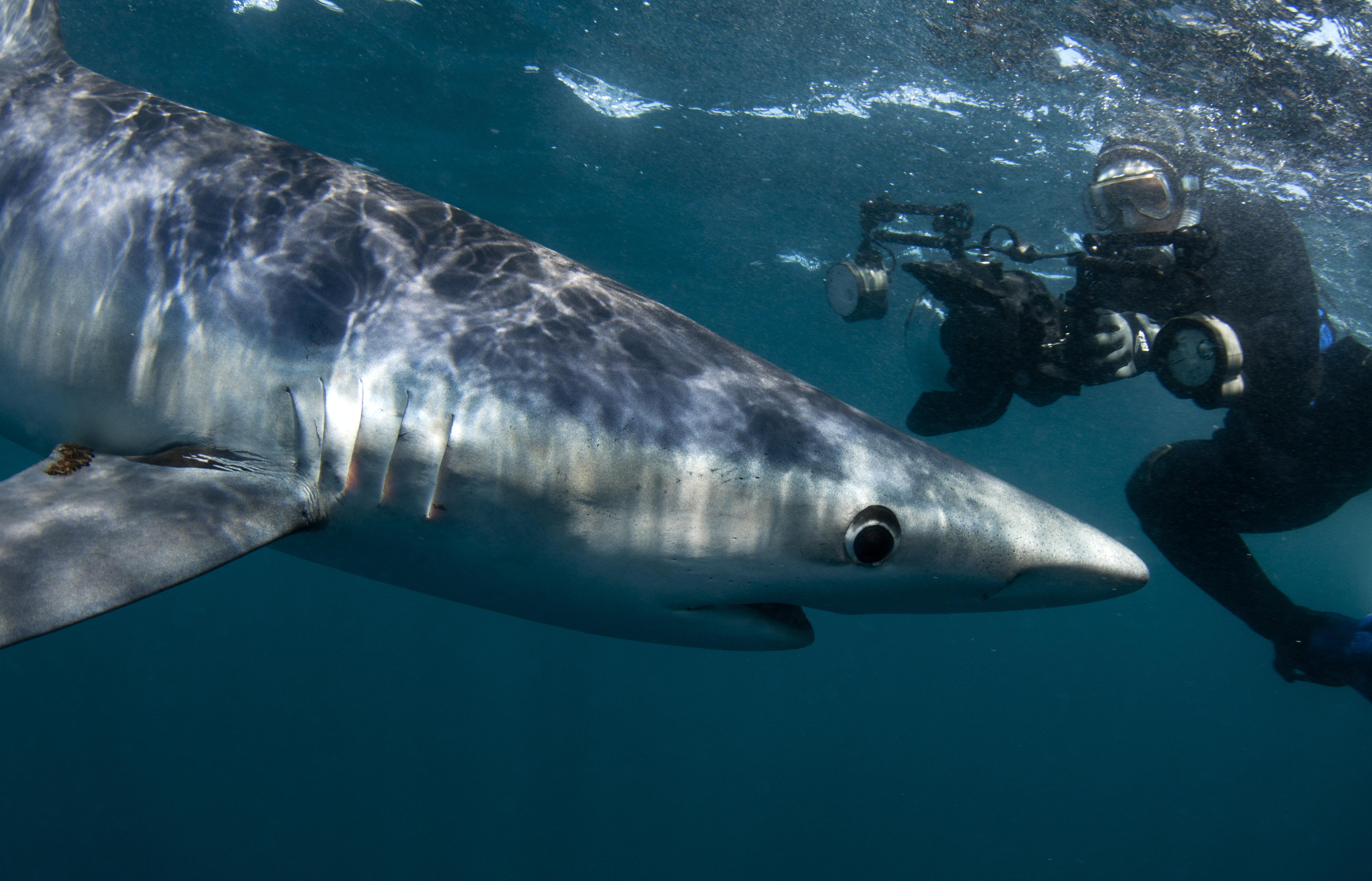 Shark Week TV Program