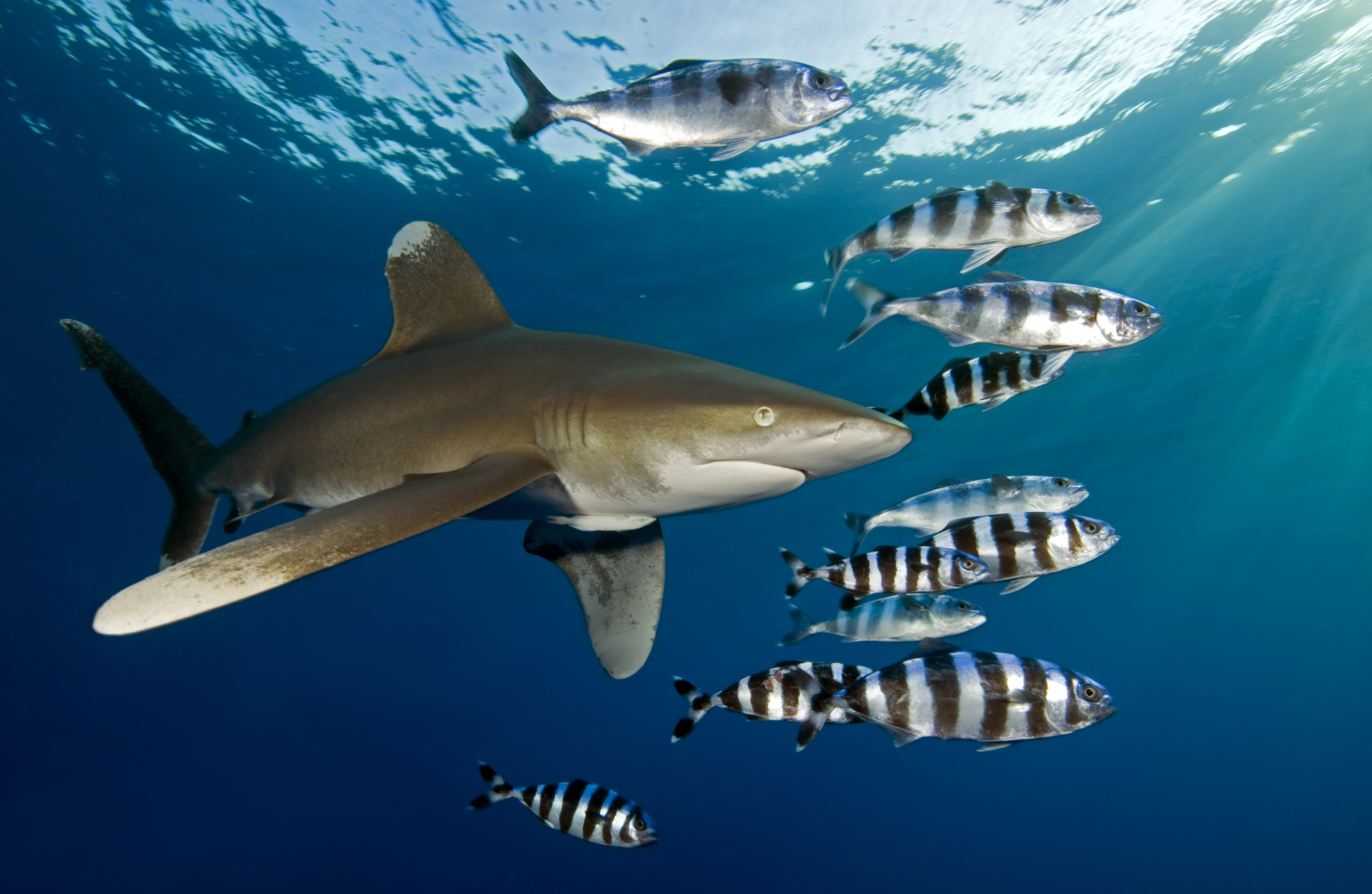 Shark Week 2017 Everything You Need To Know