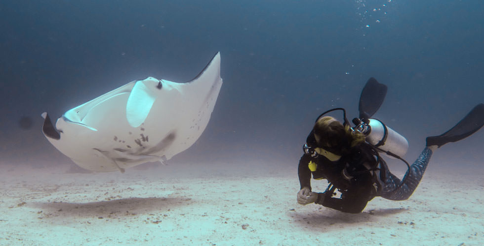 Steph while diving with a reef manta ray