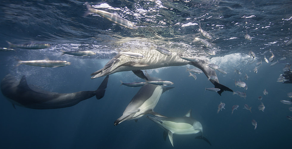 a pod of dolphins
